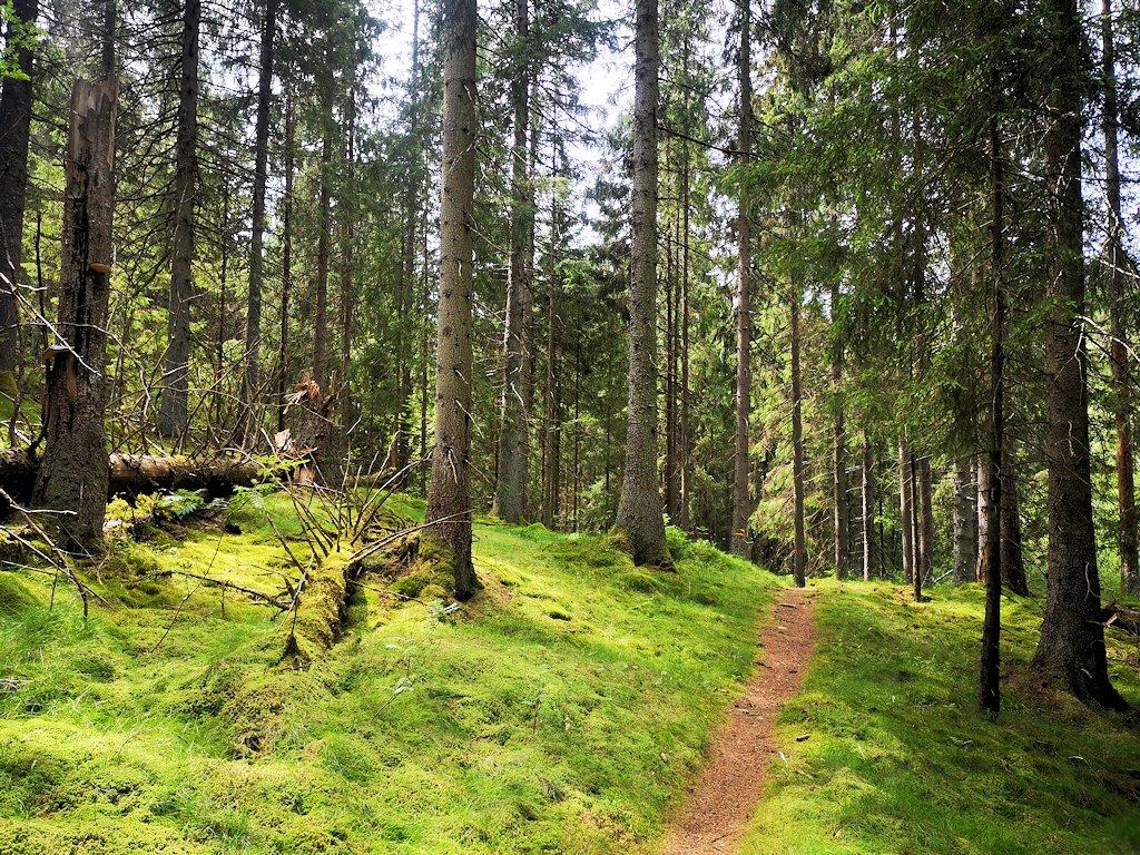Schweden zu Fuß - Schmale Pfade