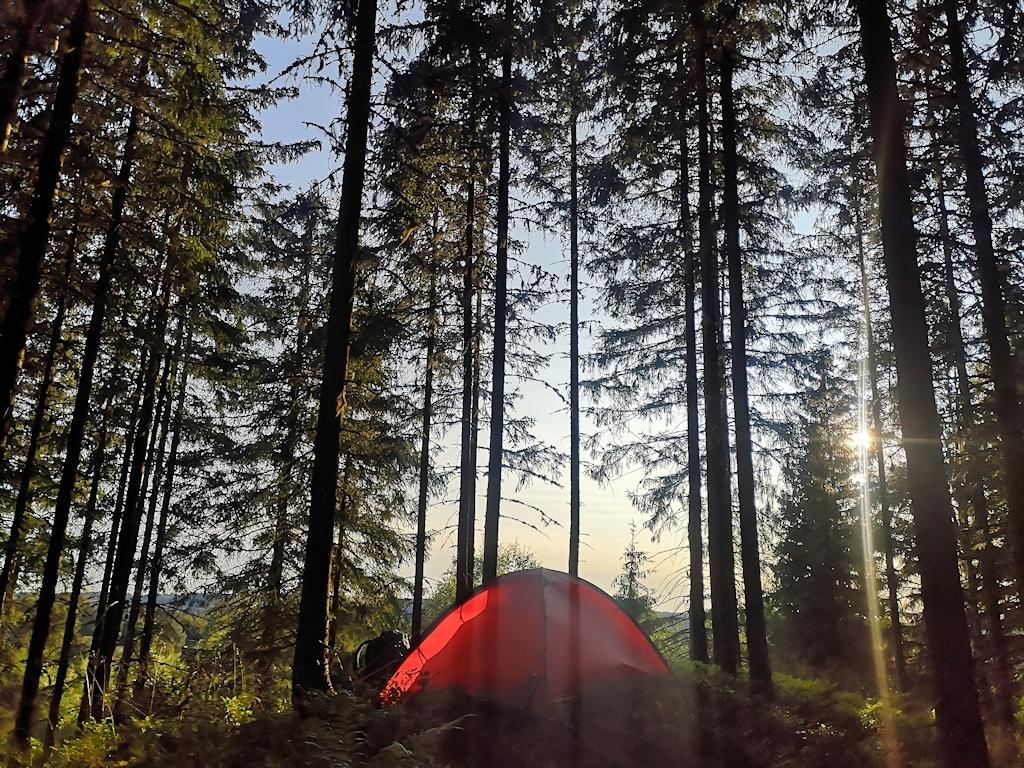 Zeltplatz im Wald