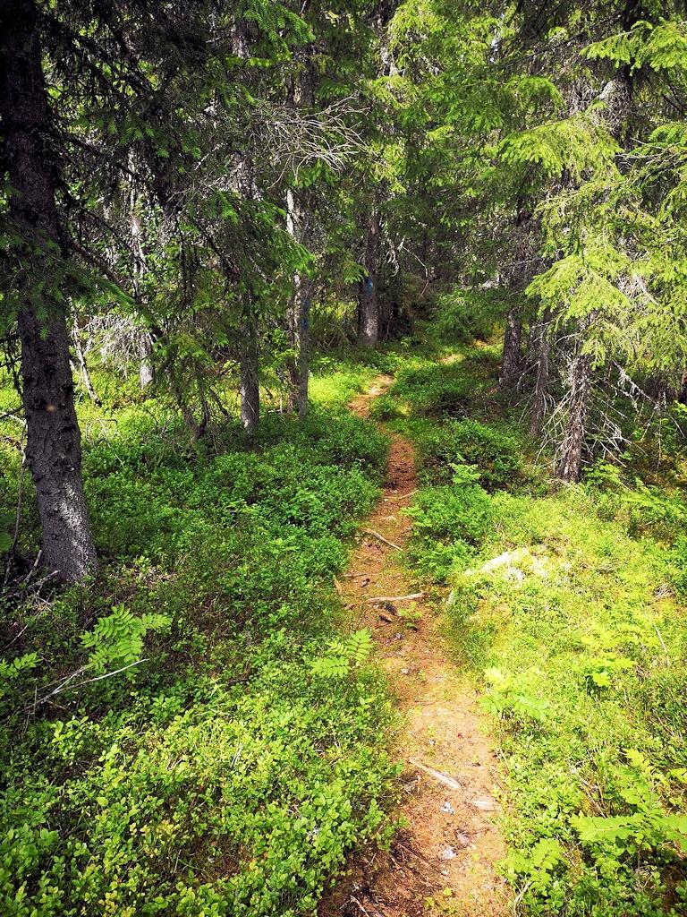 Unterwegs im Finnskogen
