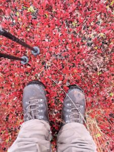 Herbstfarben in Finnland